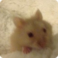 Adopt A Pet :: Twizzler - St. Paul, MN