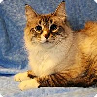Adopt A Pet :: Milo - Greensboro, NC