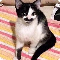 Adopt A Pet :: A..  Stash - Mooresville, NC