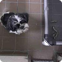 Adopt A Pet :: MOPPSIE - Waynesville, NC