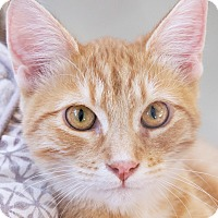 Adopt A Pet :: Epperson - St Louis, MO