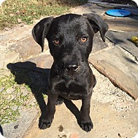 Adopt A Pet :: Matthew - Hayes, VA