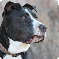 Adopt A Pet :: Sashay - Goleta, CA