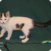 Adopt A Pet :: *SISSY - Hanford, CA