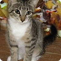 Adopt A Pet :: Summer - McEwen, TN