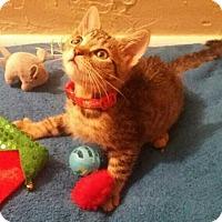 Adopt A Pet :: Zelda - West Palm Beach, FL