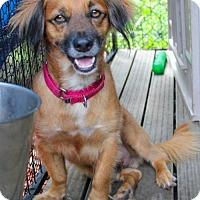 Adopt A Pet :: Sonny - Jupiter, FL