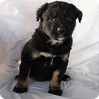 Adopt A Pet :: Milo - Mooresville, NC