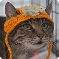 Adopt A Pet :: Whiskey - Brooklyn, NY