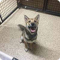 Adopt A Pet :: Ivan - Tempe, AZ