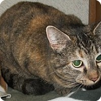 Adopt A Pet :: Tiger - Shelton, WA