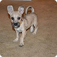 Adopt A Pet :: MARTY - Torrance, CA