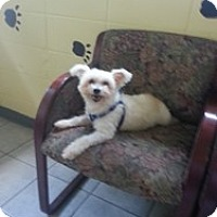 Adopt A Pet :: Lady - Crawfordville, FL