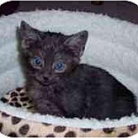 Adopt A Pet :: Bono - Arlington, VA