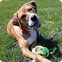 Adopt A Pet :: Ted - Bardonia, NY