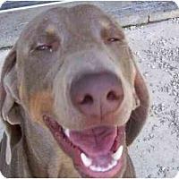 Adopt A Pet :: Hanz - Eustis, FL