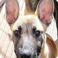 Adopt A Pet :: Baby Rooger - Oakley, CA