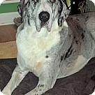 Adopt A Pet :: Goose