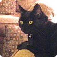 Adopt A Pet :: Wilson - Merrifield, VA