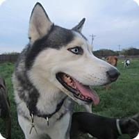 Adopt A Pet :: Kasi - Copperas Cove, TX