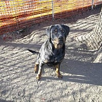 Adopt A Pet :: Ebby/Referral - Laurel, MT