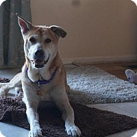 Adopt A Pet :: Walter - Livonia, MI