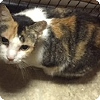 Adopt A Pet :: Cali - Forest Hills, NY
