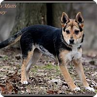 Adopt A Pet :: Kelsey - Dixon, KY