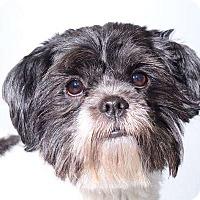 Adopt A Pet :: Rico - Sudbury, MA