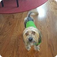 Adopt A Pet :: Picasso - Irmo, SC