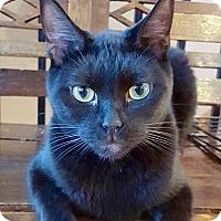 Adopt A Pet :: Isiaih - McDonough, GA