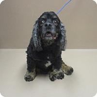 Adopt A Pet :: PEPPER - Reno, NV