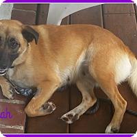 Adopt A Pet :: Tahllulah - Elburn, IL