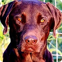 Adopt A Pet :: DUKE(LOVES HIS FAMILY!!! WOW!! - Wakefield, RI
