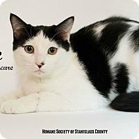 Adopt A Pet :: Eddie - Modesto, CA