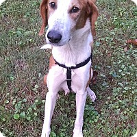Adopt A Pet :: Lucky  -Courtesy List - Richmond, VA