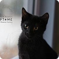 Adopt A Pet :: Davie - Edwardsville, IL