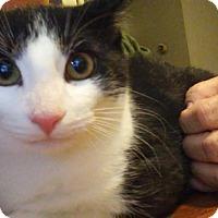 Adopt A Pet :: Lily - Columbus, OH