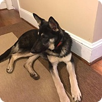 Adopt A Pet :: Misty - Raleigh, NC