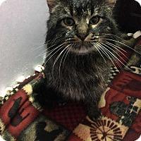 Adopt A Pet :: Channing - Mackinaw, IL