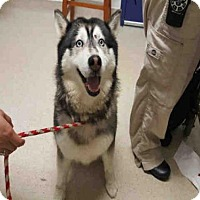 Adopt A Pet :: *BELLA - Bakersfield, CA
