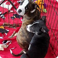 Adopt A Pet :: MAY - Canton, GA