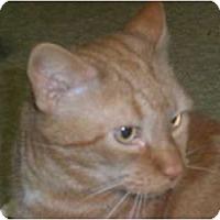 Adopt A Pet :: Ralph - Stafford, VA