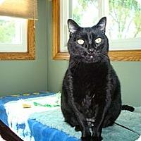 Adopt A Pet :: Peyton - Lombard, IL