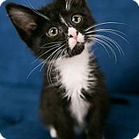Adopt A Pet :: Squirt - Eagan, MN