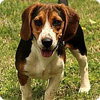 Adopt A Pet :: Brogan - Staunton, VA