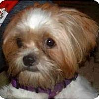 Adopt A Pet :: Thomas - Mays Landing, NJ