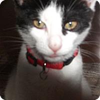 Adopt A Pet :: Carter - Colmar, PA