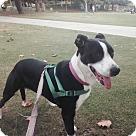 Adopt A Pet :: MAMA