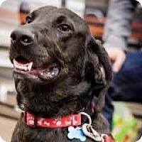 Adopt A Pet :: Mason - Minneapolis, MN